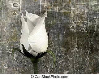 rózsa, grunge
