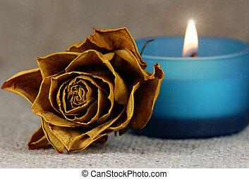 rózsa, kifakult