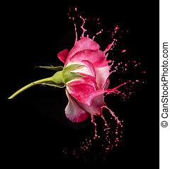 rózsa, loccsan, piros