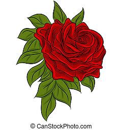 rózsa, rajz