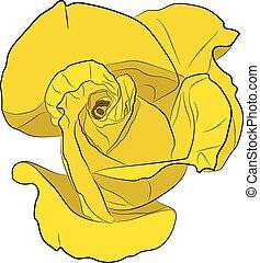 rózsa, sárga, vektor, rajz, ábra