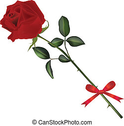rózsa, szár