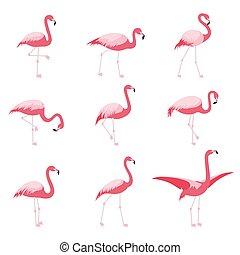 rózsaszínű, állhatatos, elszigetelt, tropikus, flamingó, flamingók