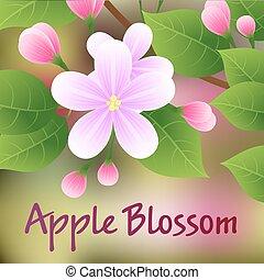 rózsaszínű, alma, virágzás, fa, flowers., vektor, elágazik