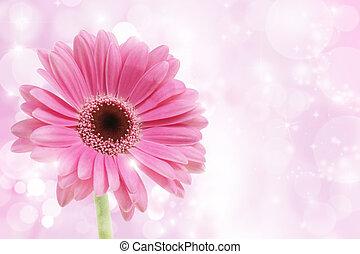 rózsaszínű, gerbera, virág