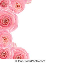 rózsaszínű, határ, rózsa