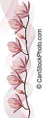 rózsaszínű, magnólia, elszigetelt, háttér., finom, elágazik, fehér, függöny