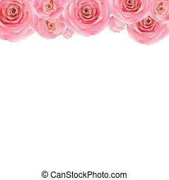 rózsaszínű, pasztell, határ, rózsa