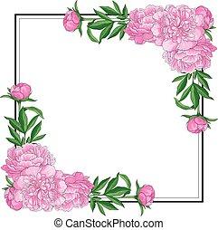 rózsaszínű, peonies, derékszögben, hely, szöveg, háttér., alakít, kanyarodik, tender, fehér, üres