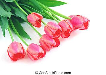 rózsaszínű, tulipánok, white