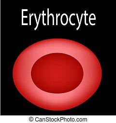 röd, infographics., blod, cell., struktur, vektor, ...