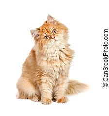 röd kattunge, sittande, med, hans, huvud, från sidan,...