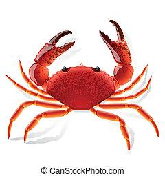 röd, krabba