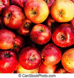 röd, mogen, äpplen, maj, använda, som, sommar frukt, bakgrund