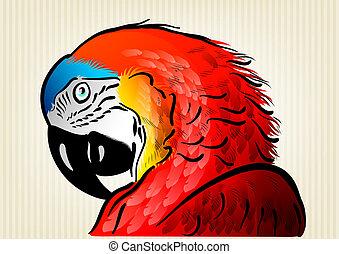 röd, papegoja