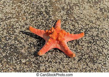 röd, sjöstjärna, på, hav, tropisk, sand, ocean, strand, hos, solnedgång, begrepp, av, sommar, avkoppling
