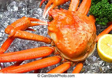 röd, snö, krabba