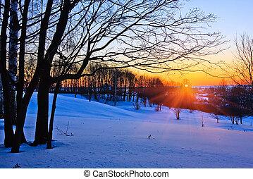 röd solnedgång, in, vinter, skog