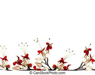 röda svarta, och, vit, fjäril, blomma, gräns, isolerat, med,...