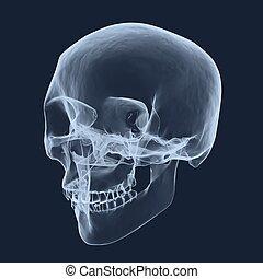 röntgen, fej, emberi koponya