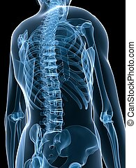 röntgenaufnahme, skelettartig, zurück