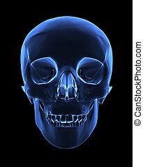 röntgenaufnahme, totenschädel