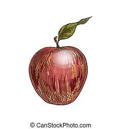 rött äpple, med, leaf., fyllda, färg, realistisk, skiss