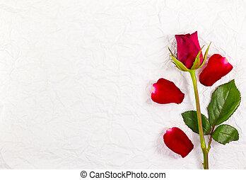 rött rosa