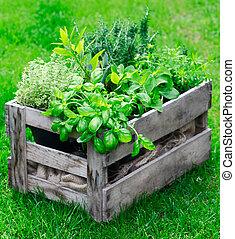 rústico, hierbas, cajón, fresco