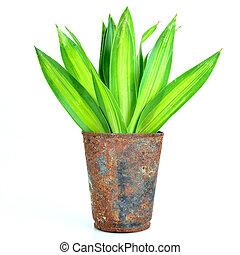 rústico, verde, viejo, lata, plant.