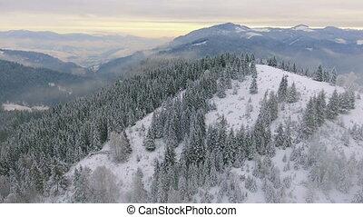 rüber fliegen, a, schöne , winter, wald, in, der, hochländer