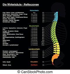 rückgrat, reflexology, tabelle, deutscher text
