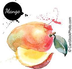 ręka, akwarela, mangowiec, tło, pociągnięty, biały, ...