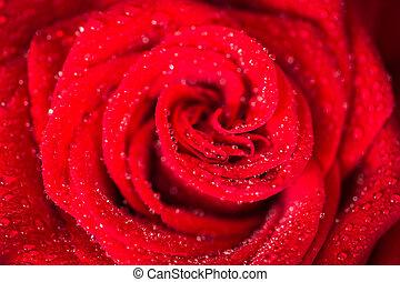 růže, nad, znejmilejší den, červeň