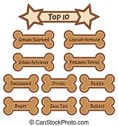 raças, popular, maioria, cão superior, 10