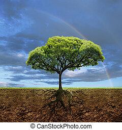 raíces, de, vida