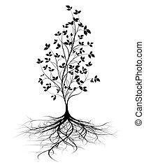 raíces, vector, árbol, joven, plano de fondo
