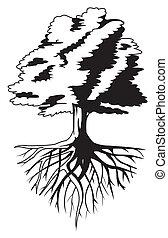raíz árbol