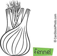 raíz de hinojo, planta