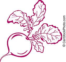 rabanete, folhas, pictograma
