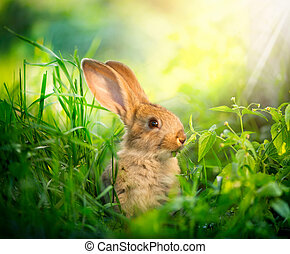 rabbit., 藝術, 設計, ......的, 漂亮, 很少, 復活節bunny, 在, the, 草地