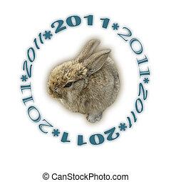 rabbit 2011