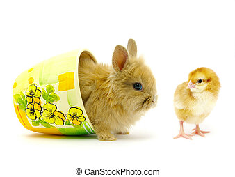 rabbit and chick on white