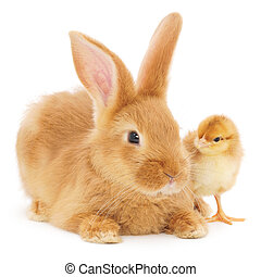 Rabbit and chicken