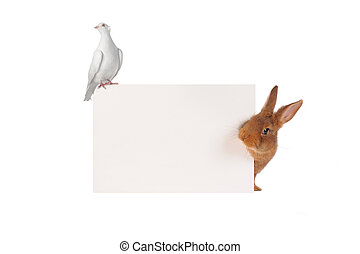 Rabbit and dove
