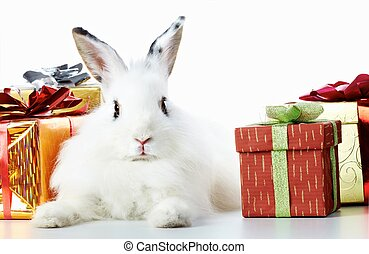Rabbit and gifts - Image of cautious rabbit surrounded by ...