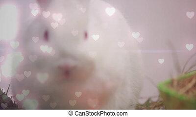 Rabbit and hearts