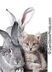 Rabbit and kitten - Image of grey rabbit with cute kitten...