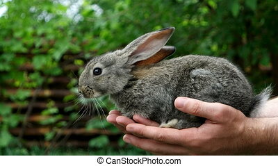 Rabbit. Animal in man hands - Protection and care of nature...