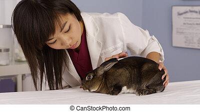 Rabbit at the vet's office